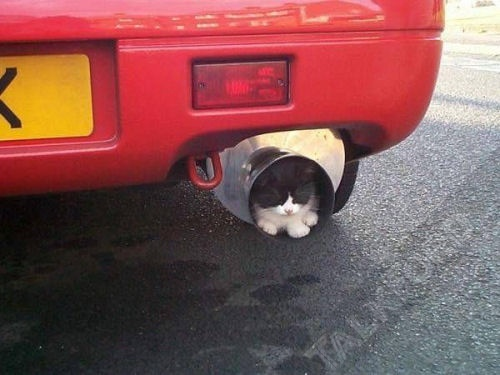 exhaust-ed-cat.jpg
